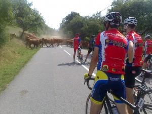 kravy na zempline